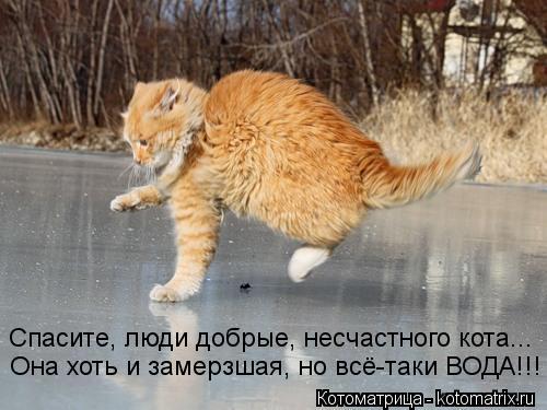 Котоматрица: Она хоть и замерзшая, но всё-таки ВОДА!!! Спасите, люди добрые, несчастного кота...