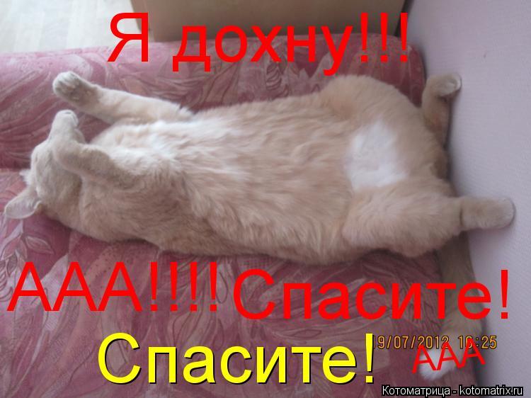 Котоматрица: Я дохну!!! ААА!!!! Спасите! Спасите! ААА