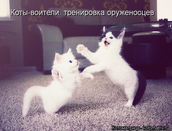 Котоматрица: Коты-воители. тренировка оруженосцев