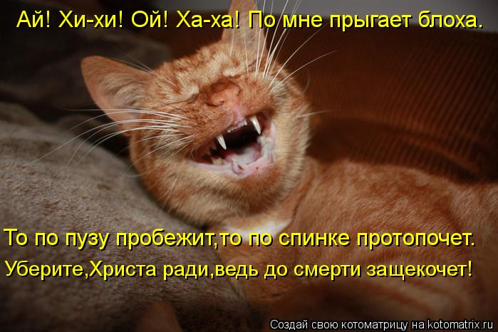 http://kotomatrix.ru/images/lolz/2012/07/19/kotomatritsa_Kx.jpg