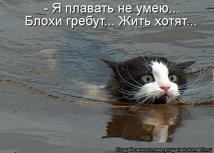 Котоматрица: - Я плавать не умею... Блохи гребут... Жить хотят...