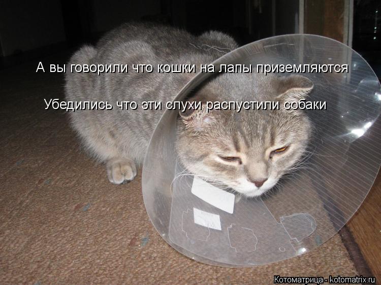Котоматрица: А вы говорили что кошки на лапы приземляются Убедились что эти слухи распустили собаки