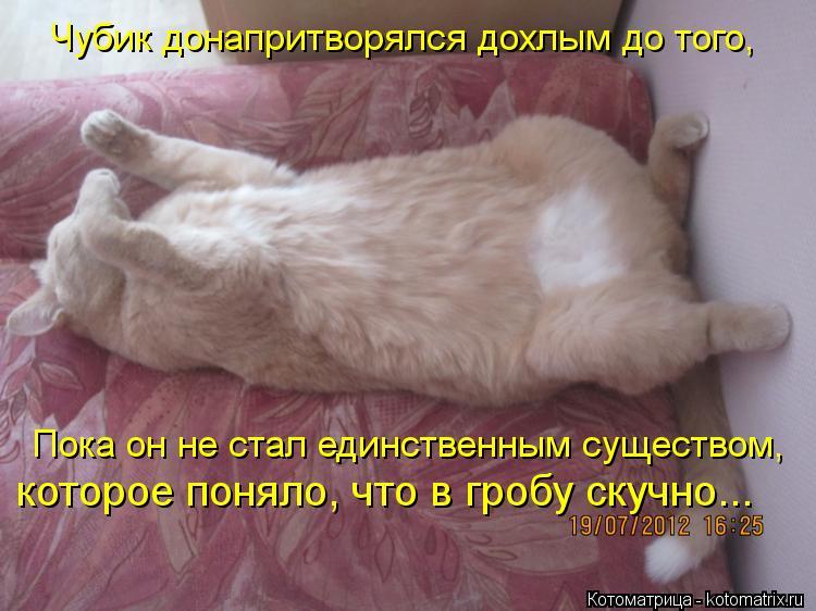 Котоматрица: Чубик донапритворялся дохлым до того, Пока он не стал единственным существом, которое поняло, что в гробу скучно...