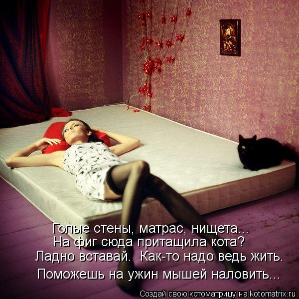 Котоматрица: Голые стены, матрас, нищета... На фиг сюда притащила кота? Поможешь на ужин мышей наловить... Ладно вставай.  Как-то надо ведь жить.