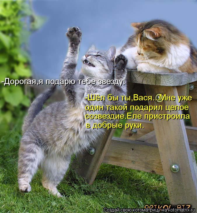 Котоматрица: -Дорогая,я подарю тебе звезду! -Шёл бы ты,Вася...Мне уже один такой подарил целое созвездие.Еле пристроила в добрые руки.