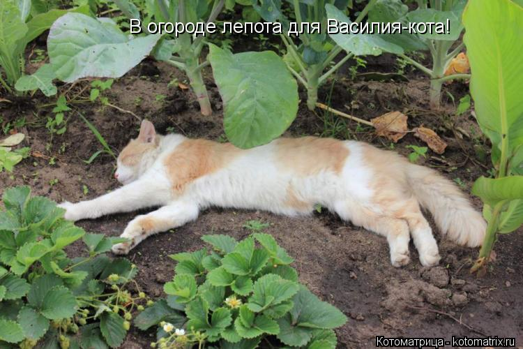 http://kotomatrix.ru/images/lolz/2012/07/19/kotomatritsa_dv.jpg