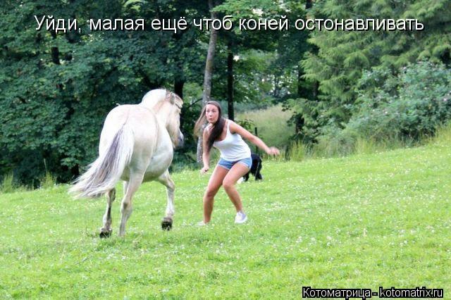 Котоматрица: Уйди, малая ещё чтоб коней остонавливать