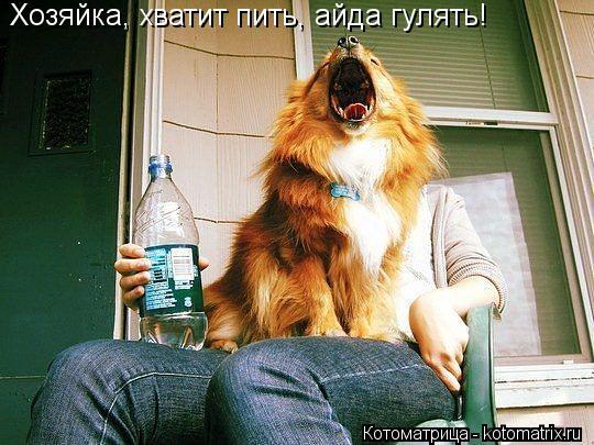Котоматрица: Хозяйка, хватит пить, айда гулять!