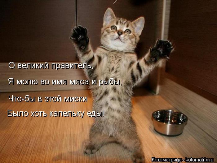 Котоматрица: О великий правитель, Я молю во имя мяса и рыбы, Что-бы в этой миски Было хоть капельку еды!