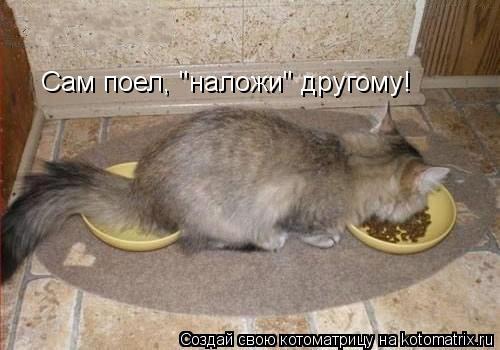 "Котоматрица: Сам поел, ""наложи"" другому!"