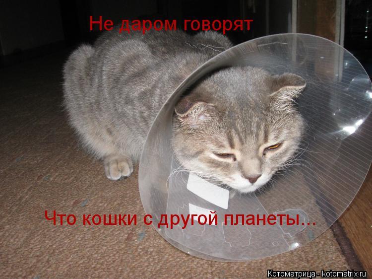 Котоматрица: Не даром говорят Что кошки с другой планеты...