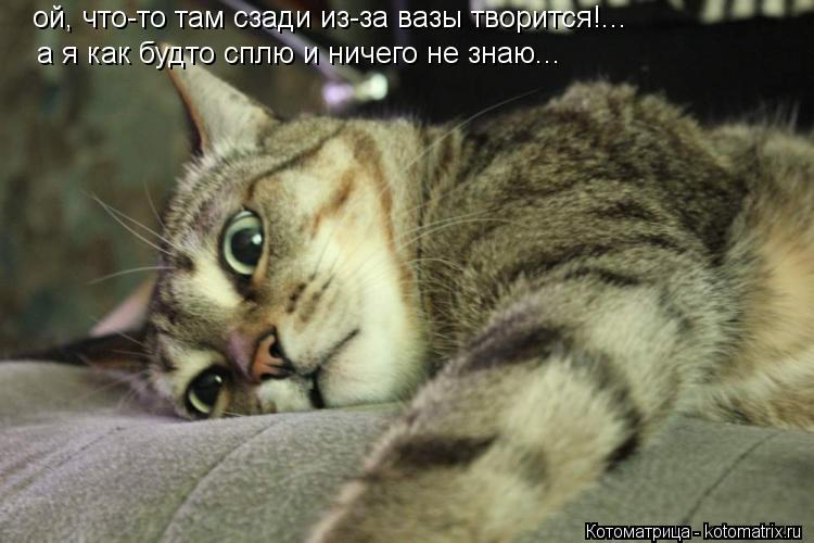 Котоматрица: ой, что-то там сзади из-за вазы творится!... а я как будто сплю и ничего не знаю...
