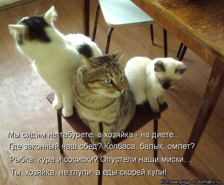 Котоматрица: Мы сидим на табурете, а хозяйка - на диете... Где законный наш обед? Колбаса, балык, омлет? Рыбка, кура и сосиски? Опустели наши миски.... Ты, хозя