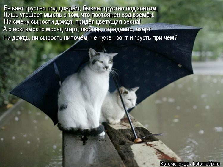 Котоматрица: Бывает грустно под дождём, бывает грустно под зонтом, Лишь утешает мысль о том, что постоянен ход времён. На смену сырости дождя, придёт цвет
