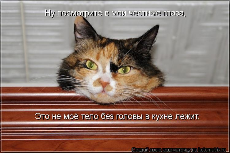 Котоматрица: Ну посмотрите в мои честные глаза, Это не моё тело без головы в кухне лежит.