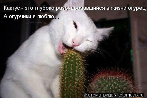 Котоматрица: Кактус - это глубоко разочаровавшийся в жизни огурец А огурчики я люблю...