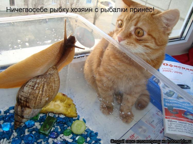 Котоматрица: Ничегвосебе рыбку хозяин с рыбалки принёс!
