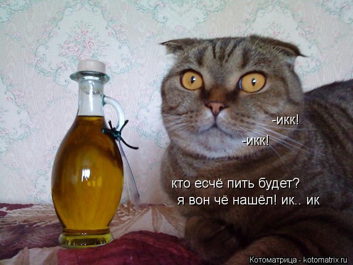 Котоматрица: -икк! -икк! кто есчё пить будет? я вон чё нашёл! ик.. ик