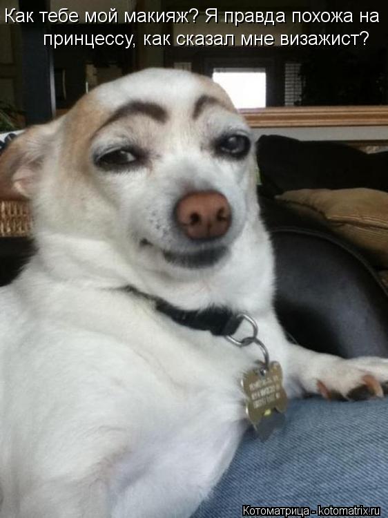 Котоматрица: Как тебе мой макияж? Я правда похожа на принцессу, как сказал мне визажист?