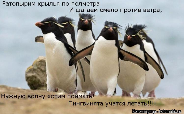 Котоматрица: Ратопырим крылья по полметра Нужную волну хотим поймать! Пингвинята учатся летать!!!! И шагаем смело против ветра,
