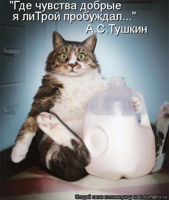 """Котоматрица: """"Где чувства добрые  я лиТрой пробуждал..."""" А.С.Тушкин"""