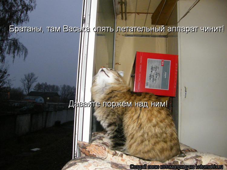 Котоматрица: Братаны, там Васька опять летательный аппарат чинит! Давайте поржём над ним!