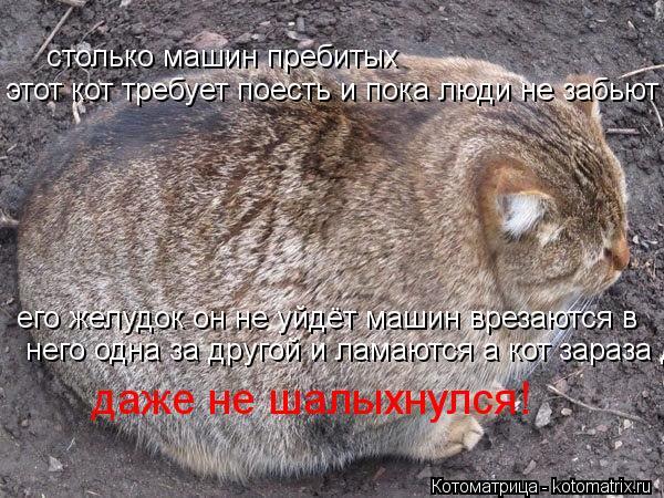 Котоматрица: столько машин пребитых этот кот требует поесть и пока люди не забьют его желудок он не уйдёт машин врезаются в него одна за другой и ламаютс