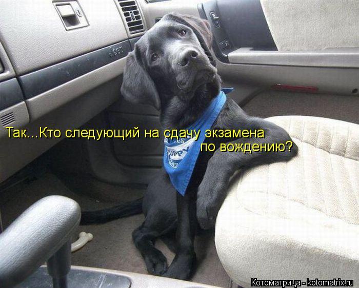 Котоматрица: Так...Кто следующий на сдачу экзамена  по вождению?