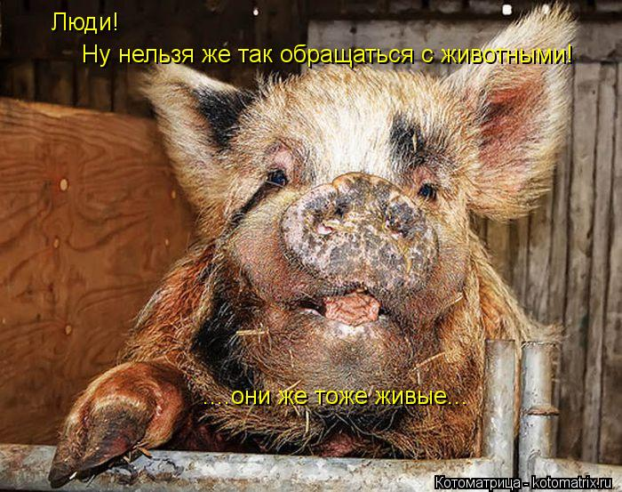 Котоматрица: Люди!  Ну нельзя же так обращаться с животными! ....они же тоже живые...