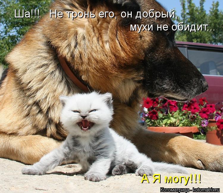 Котоматрица: Ша!!!   Не тронь его, он добрый,  мухи не обидит...  А Я могу!!!
