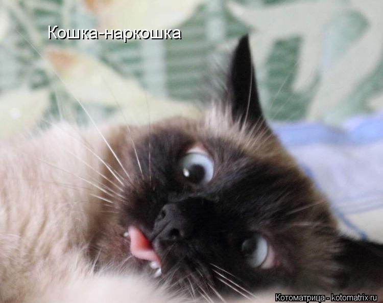 Котоматрица: Кошка-наркошка
