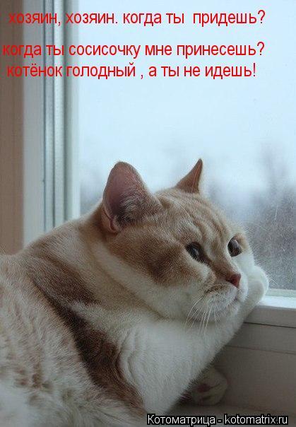 Котоматрица: хозяин, хозяин. когда ты  придешь? когда ты сосисочку мне принесешь? котёнок голодный , а ты не идешь!