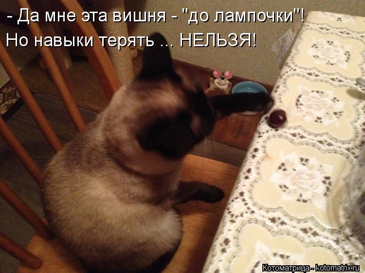 "Котоматрица: - Да мне эта вишня - ""до лампочки""! Но навыки терять ... НЕЛЬЗЯ!"