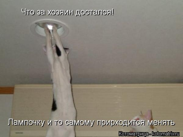 Котоматрица: Что за хозяин достался! Лампочку и то самому прирходится менять