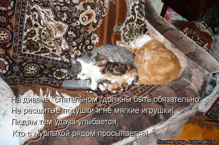 """Котоматрица: На диване """"спательном"""" должны быть обязательно: Не расшитые подушки и не мягкие игрушки! Людям тем удача улыбается,  Кто с мурлыкой рядом про"""