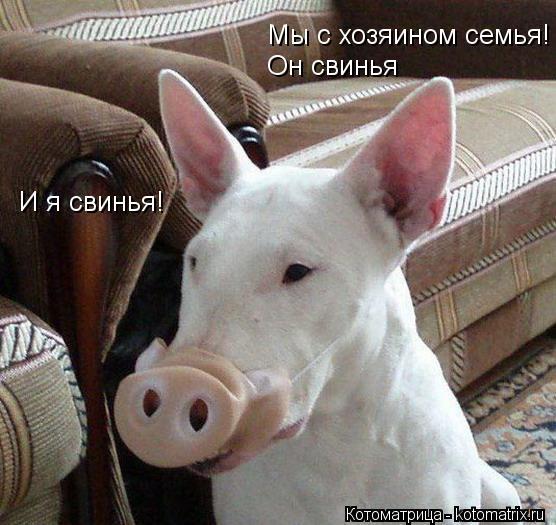 Котоматрица: Мы с хозяином семья! Он свинья И я свинья!