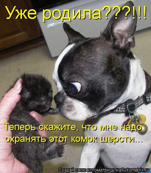 Котоматрица: Уже родила???!!! Теперь скажите, что мне надо охранять этот комок шерсти...