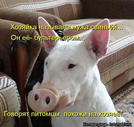 Котоматрица: Хозяйка называла мужа свиньёй... Он её- бультерьером... Говорят питомцы  похожи на хозяев!