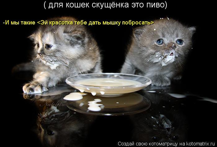 Котоматрица: ( для кошек скущёнка это пиво) -И мы такие <Эй красотка тебе дать мышку побросать>