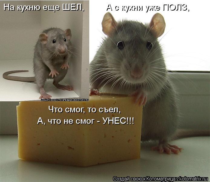 Котоматрица: На кухню еще ШЕЛ,         А с кухни уже ПОЛЗ, Что смог, то съел,  А, что не смог - УНЕС!!!