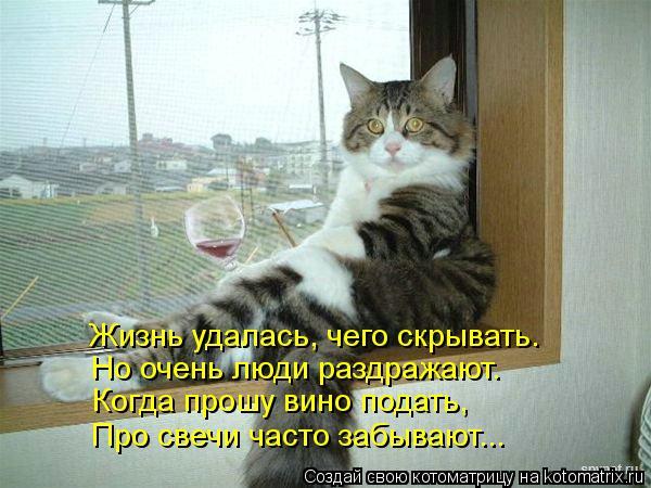 Котоматрица: Жизнь удалась, чего скрывать. Но очень люди раздражают. Когда прошу вино подать, Про свечи часто забывают...