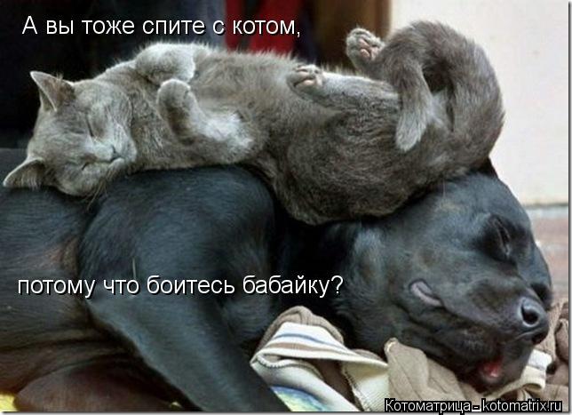 Котоматрица: А вы тоже спите с котом, потому что боитесь бабайку?