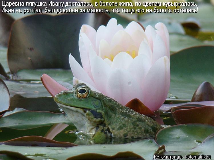 Котоматрица: Царевна лягушка Ивану досталась, в болоте жила, по цветам кувыркалась, Иван не роптал, был доволен за малость, что теща его на болоте осталас