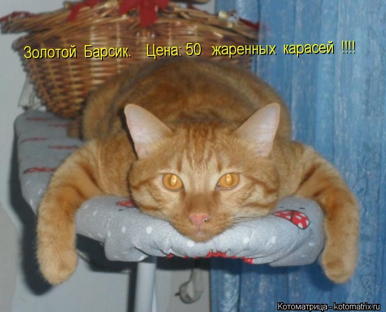 http://kotomatrix.ru/images/lolz/2012/07/21/kotomatritsa_sM.jpg