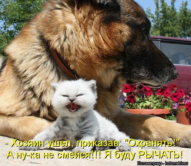 "Котоматрица: - Хозяин ушел, приказав: ""Охранять!"" А ну-ка не смейся!!! Я буду РЫЧАТЬ!"