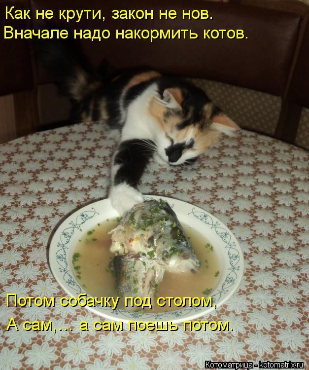 Котоматрица: Как не крути, закон не нов. Вначале надо накормить котов. Потом собачку под столом, А сам,… а сам поешь потом.