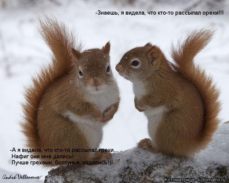 Котоматрица: -Знаешь, я видела, что кто-то рассыпал орехи!!! -А я видела, что кто-то рассыпал грехи... Нафиг они мне дались! Лучше грехами, болтунья, подавись!!