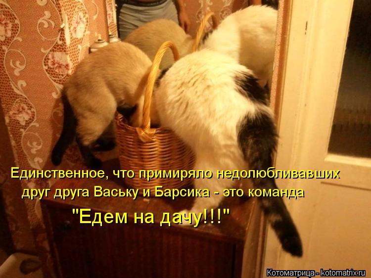 """Котоматрица: Единственное, что примиряло недолюбливавших друг друга Ваську и Барсика - это команда """"Едем на дачу!!!"""""""