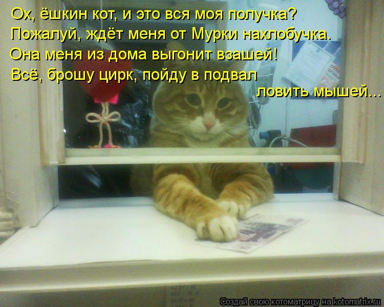 Котоматрица: Ох, ёшкин кот, и это вся моя получка? Пожалуй, ждёт меня от Мурки нахлобучка. Она меня из дома выгонит взашей! Всё, брошу цирк, пойду в подвал л