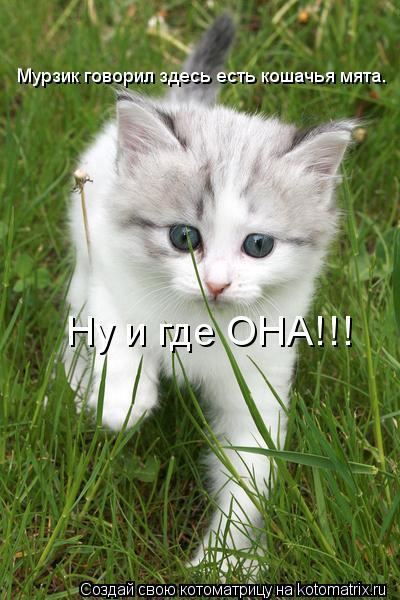 Котоматрица: Мурзик говорил здесь есть кошачья мята. Ну и где ОНА!!!